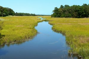 A tidal wetland