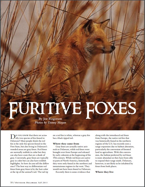 Furitive Foxes