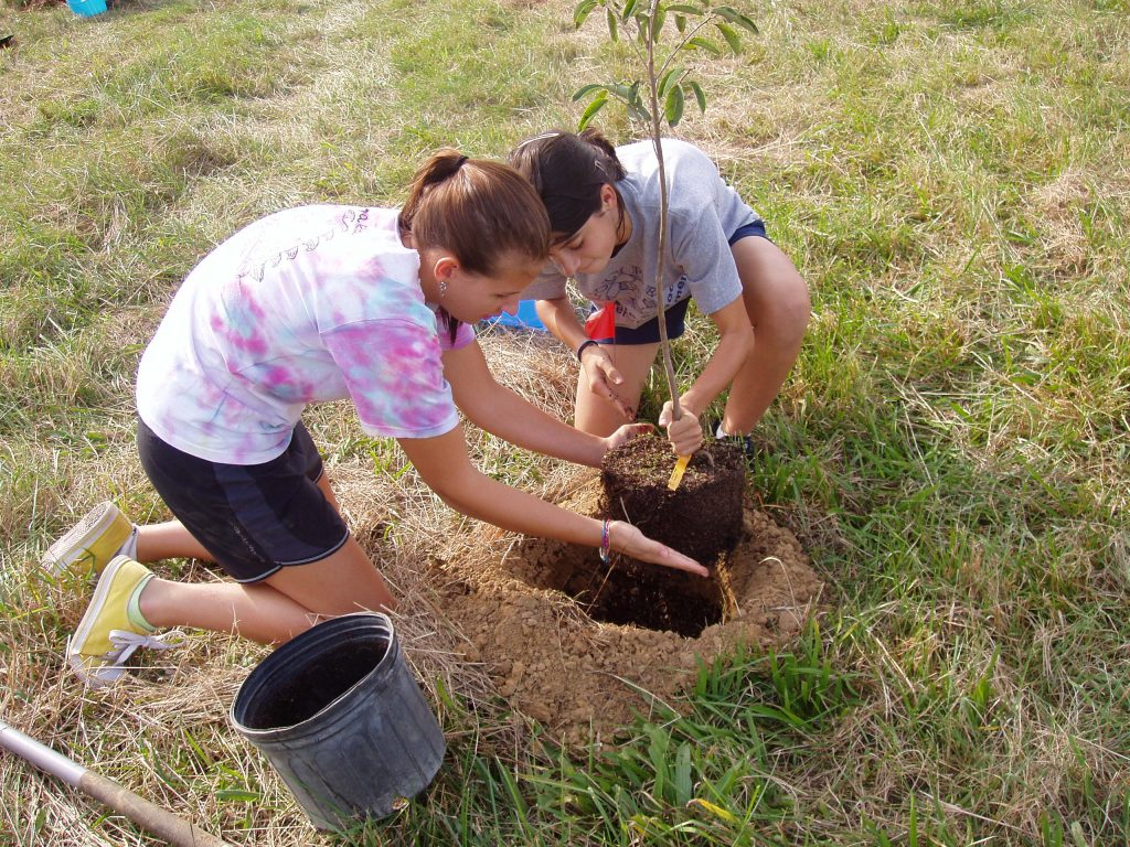 Planting a Seedling