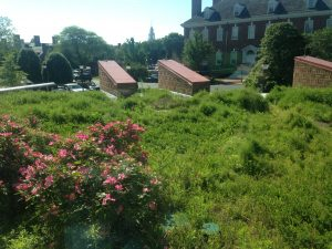 Dover Library Green Roof