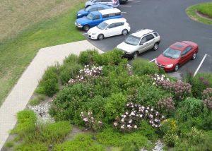 UD Lewes Campus Rain Garden