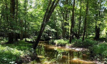 A wetland area