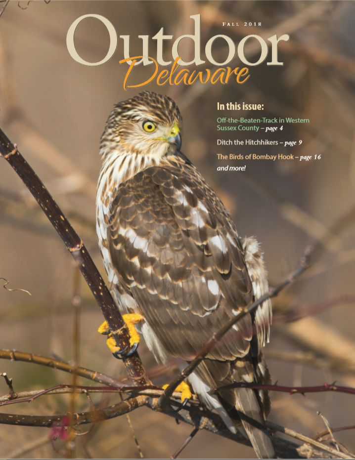 Fall 2018 Outdoor Delaware Cover