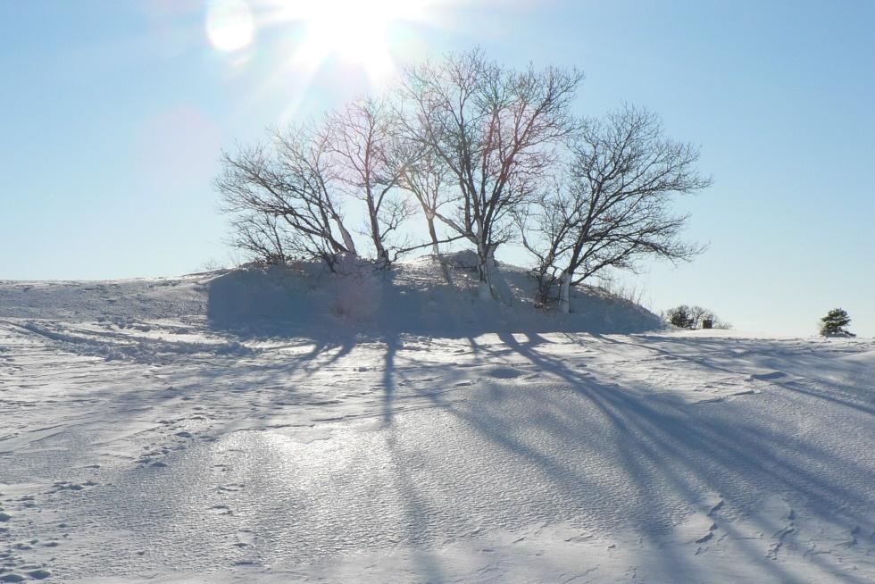 Walking Dune in Snow