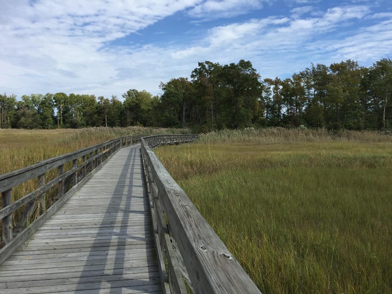St. Jones Marsh Walks