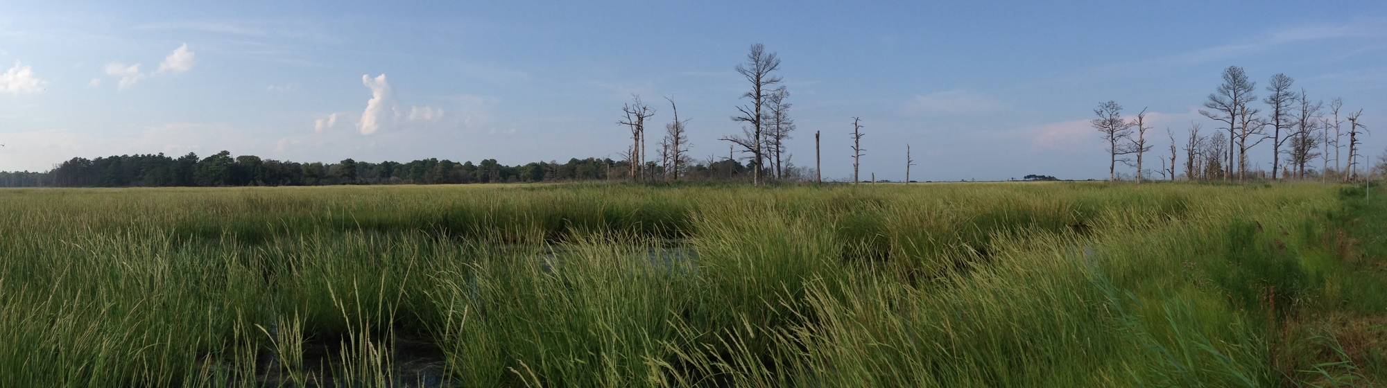 Milford Neck, Big Stone Beach Marsh