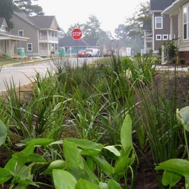 Planting to control runoff