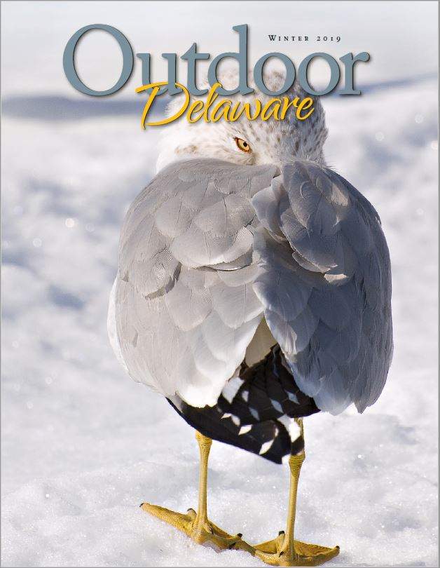 Winter 2019 Outdoor Delaware Magazine