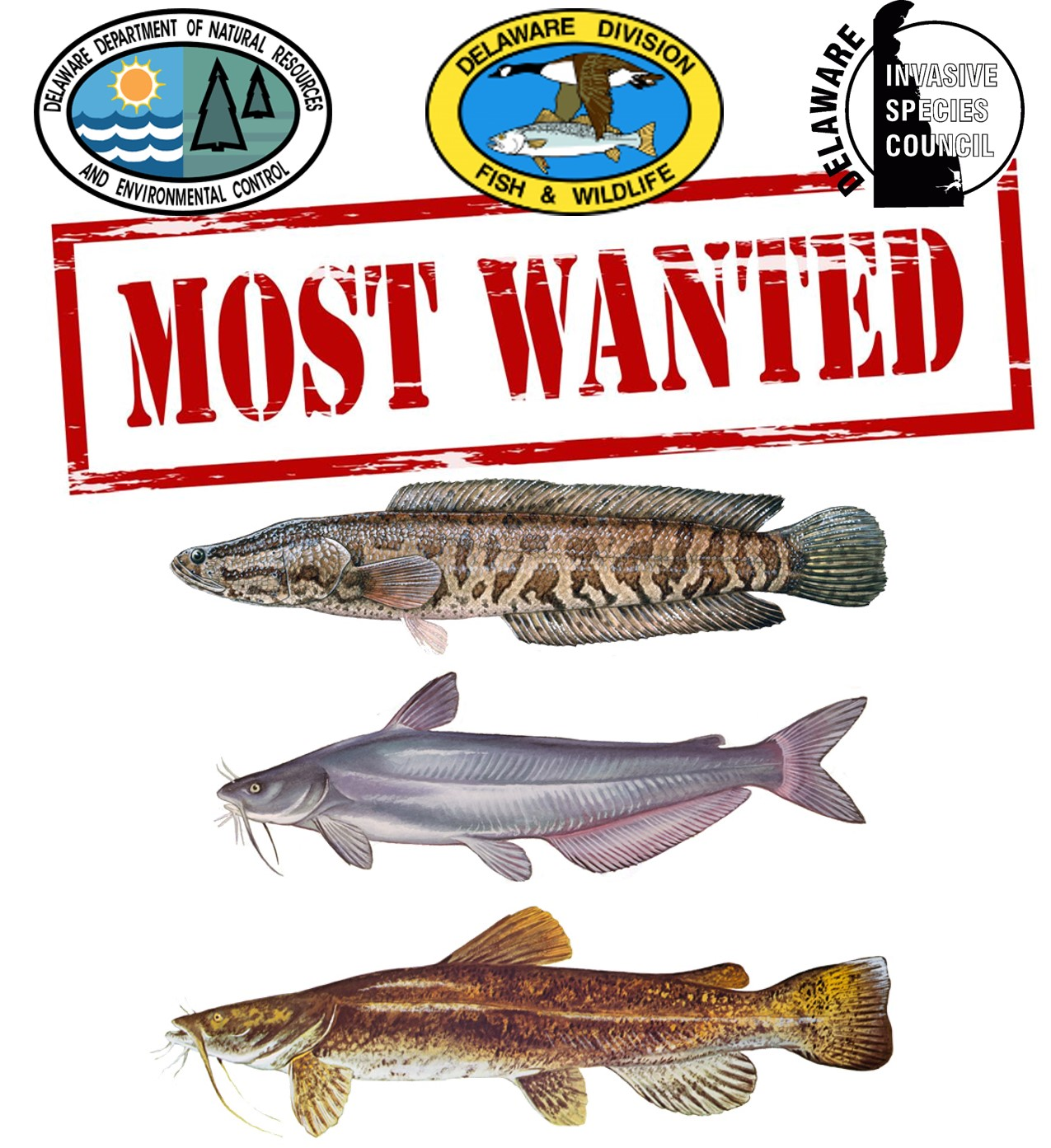 Most Wanted: Invasive Aquatic Species