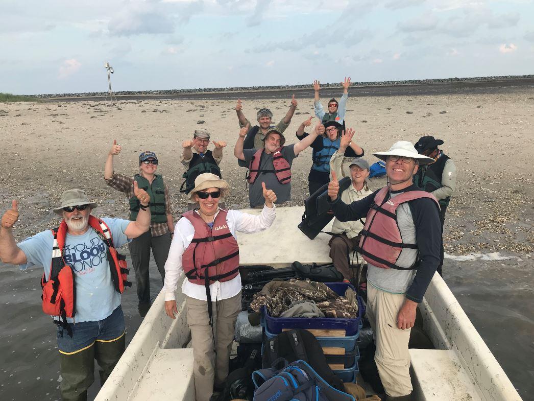 Shorebird Volunteers