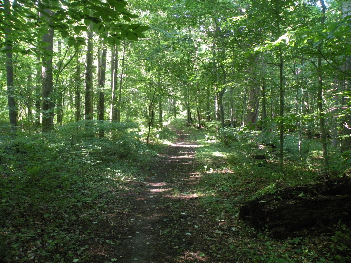 Photo of a shaded woodland