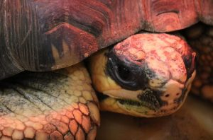 Close-up of a Tortoise