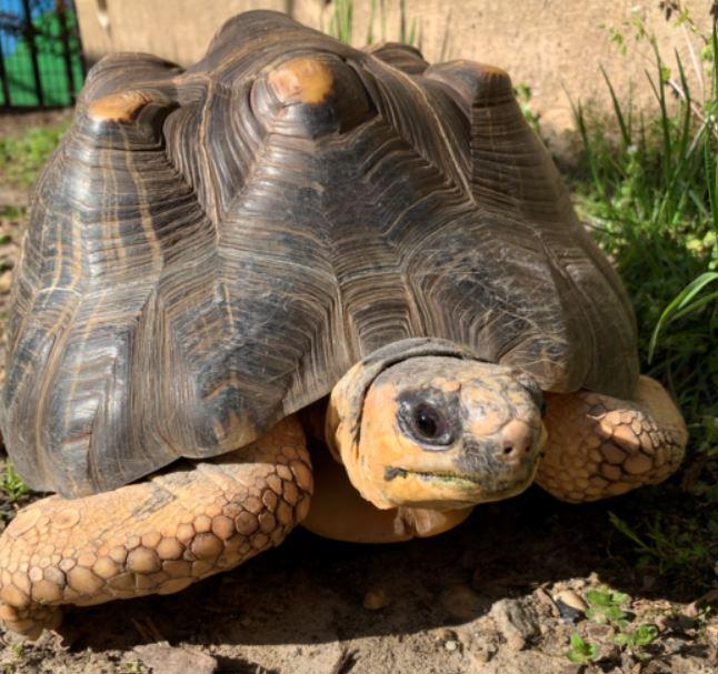 Tortoise in the Sun