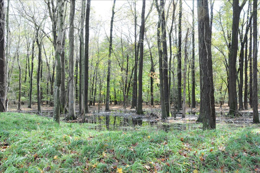 Wooded Wetlands