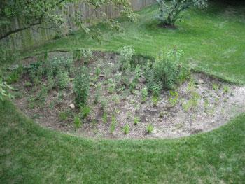Install a Rain Garden