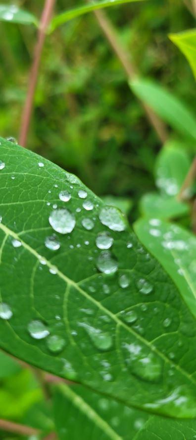 Photo of rain drops on a green leaf