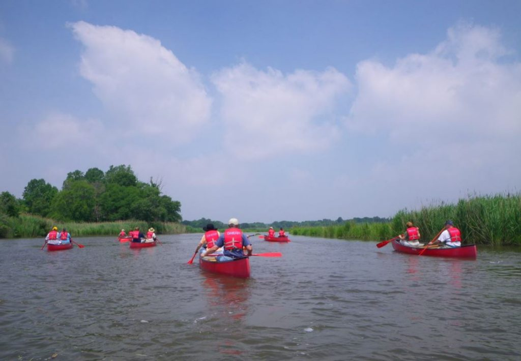 A group of canoeists paddle in a calm stream