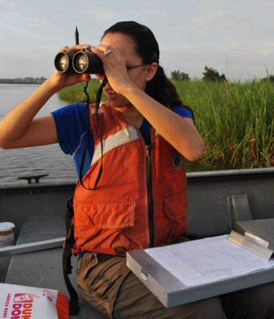 Observing Marsh Birds