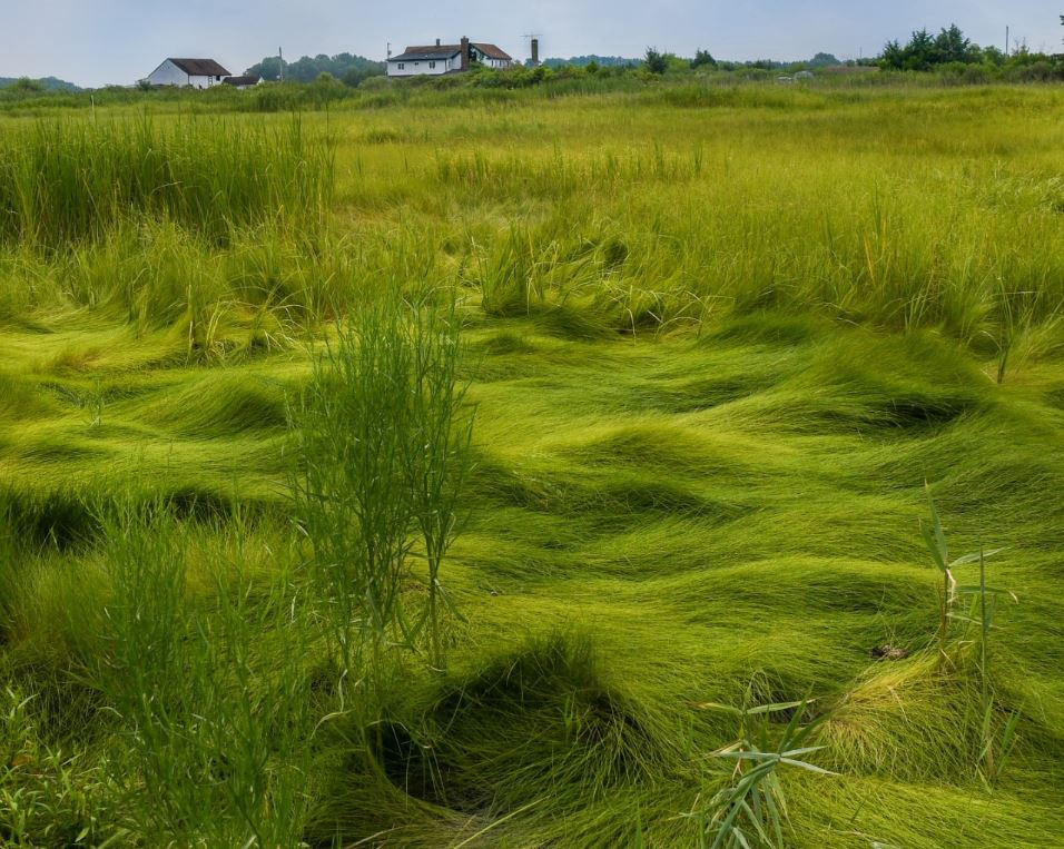 Grasslands to Home