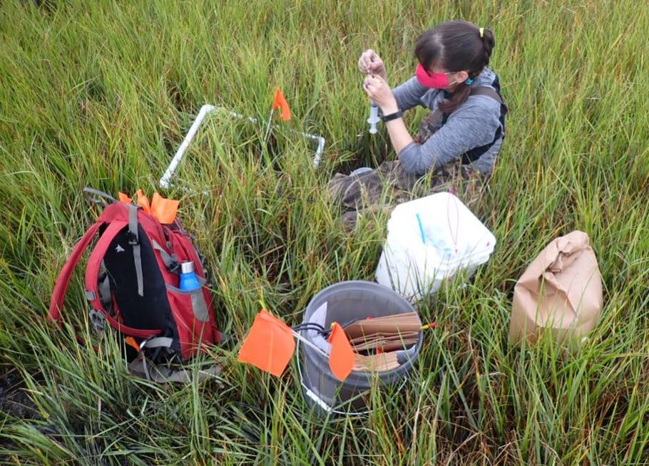 A scientist takes readings while immersed in a marsh