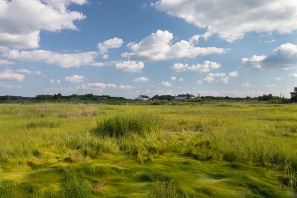 Sea of Marsh Grass