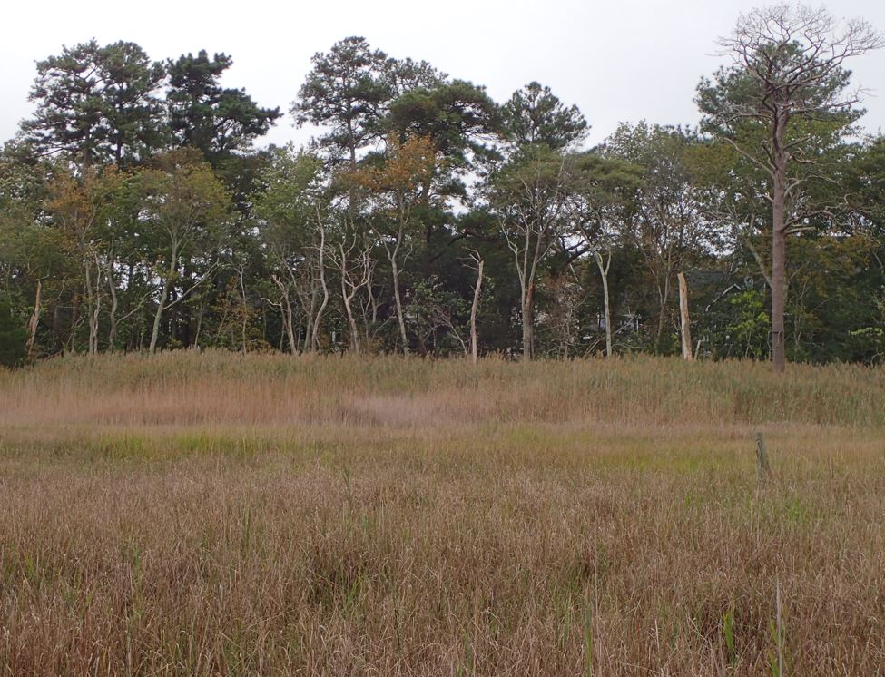 Bare trees stand at the edge of a marsh area